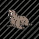 animals, mammal, marine mammal, tusks, walrus, wild mammal icon