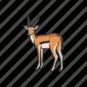 animals, antelope, gazelle, hart mountain antelope, hartebeest, mammal