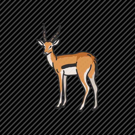 animals, antelope, gazelle, hart mountain antelope, hartebeest, mammal icon