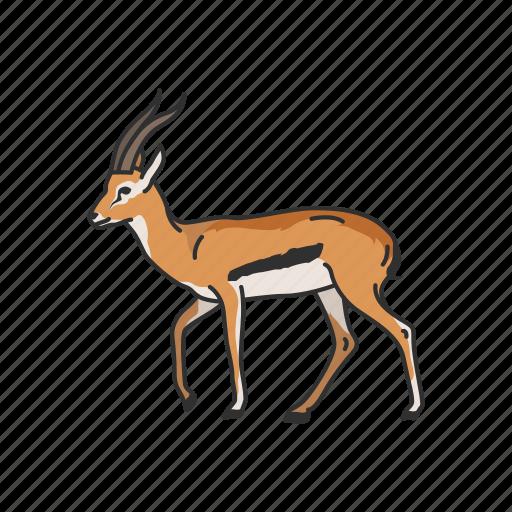 Animals, antelope, gazelle, hart mountain antelope, hartebeest, mammal icon - Download on Iconfinder