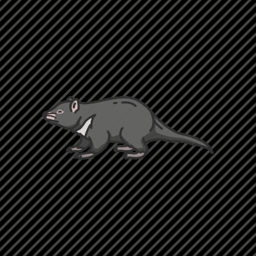 animals, mammal, rat, scavenger, tasmanian devil, taz icon