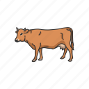 animals, cattle, cow, domestic animal, mammal, taurine cattle