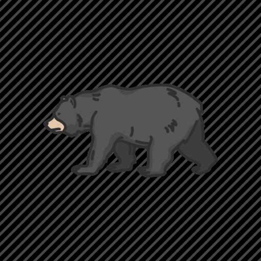 american black bear, animal, bear, black bear, mammals, wild bear icon