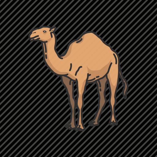 animals, arabian camel, camel, domestic animal, dromedary, mammal icon