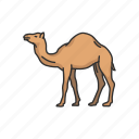 animals, arabian camel, camel, domestic animal, dromedary, mammal