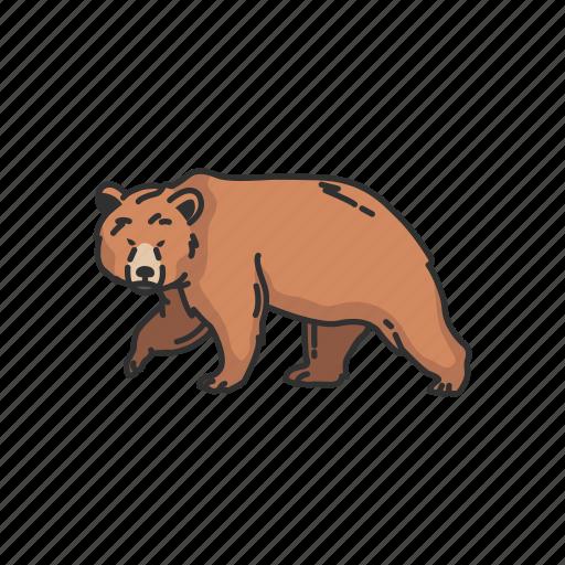 animals, bear, grizzly, kodiak bear, mammals, wild bear icon