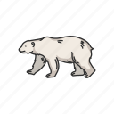 animals, bear, mammal, maritime mammal, polar bear, white bear, wild bear
