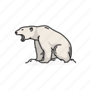 animals, bear, mammals, polar bear, white bear, wild bear icon