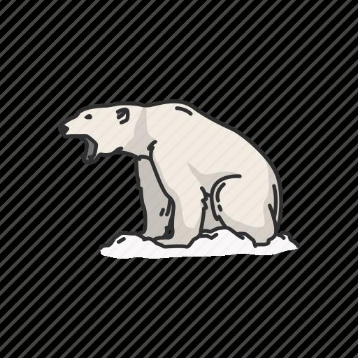 animals, bear, mammals, polar bear, white bear, wild bear icon