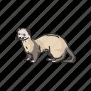 animal, aquatic mammals, mammals, marine otter, otters, sea otters