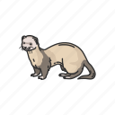 animal, aquatic mammals, mammals, marine otter, otters, sea otters icon