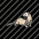 animal, aquatic mammal, mammal, marine otter, otters, sea otters
