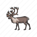 antler, animal, reindeer, deer, mammals, horned animal icon
