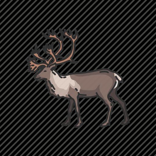 animal, antler, deer, horned animal, mammals, reindeer icon