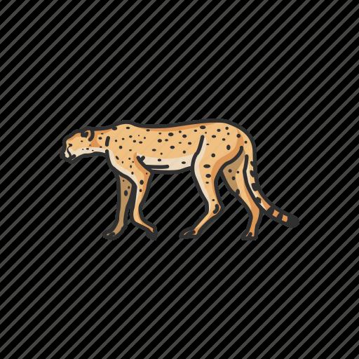 animal, feline, leopard, mammal, rosette, wild cat icon