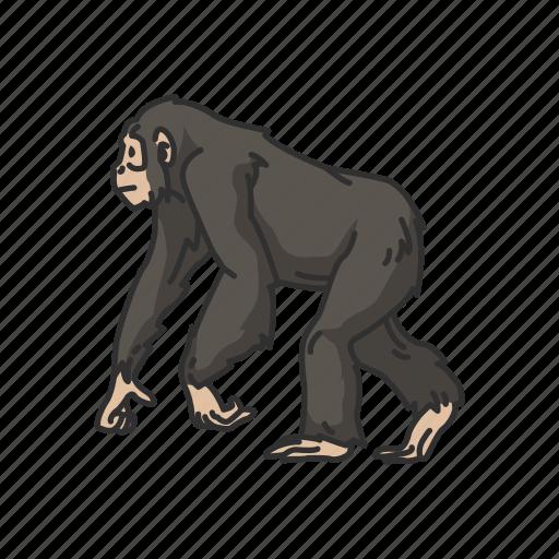 animal, ape, bonobo, chimpanzee, chimps, mammals icon