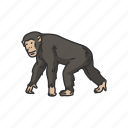 animal, ape, bonobo, chimpanzee, chimps, mammals icon