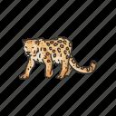 animal, feline, leopard, mammal, rosette, wild cat