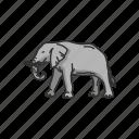 animal, elephant, elephant tusk, keystone species, large mammals, mammals