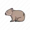 animal, mammal, pouch mammal, rodent, wombat icon