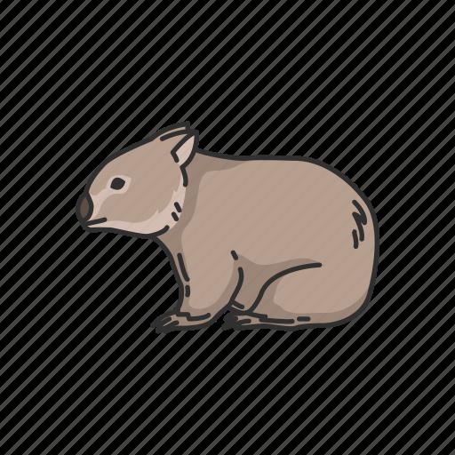 animal, mammal, pouch mammal, rodent, wombat icon