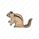 animals, chpmunk, mammals, rodent, squirrel, striped rodent