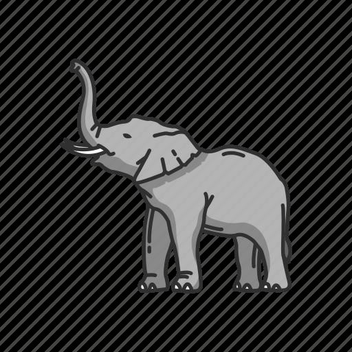 animal, elephant, elephant tusk, keystone species, large mammals, mammals icon