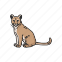 animals, cougar, feline, mammals, mountain lion, panther, puma icon