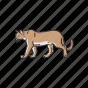 animals, cougar, feline, mammals, mountain lion, panther, puma