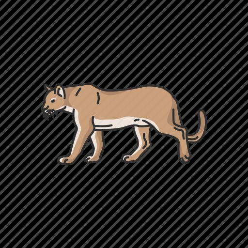 Animals, cougar, feline, mammals, mountain lion, panther, puma icon - Download on Iconfinder