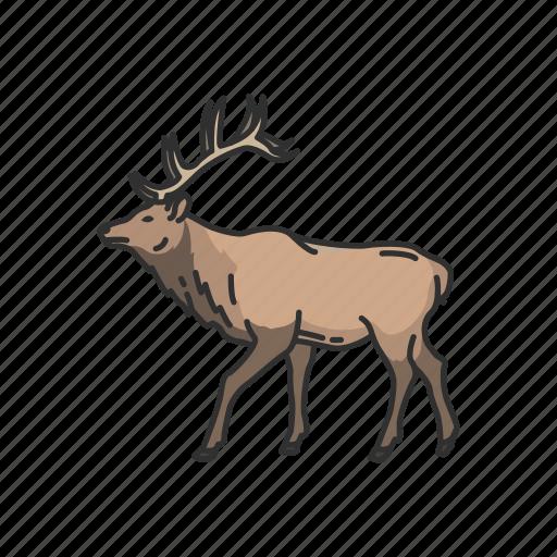 animals, antler, caribou, deer, horned animal, mammal, reindeer icon
