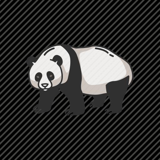 Animals, bear, giant panda, mammal, panda, panda bear icon - Download on Iconfinder