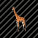 animals, camelopard, giraffa, giraffe, mammal, tallest animal