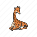 animals, camelopard, giraffa, giraffe, mammal, tallest animal