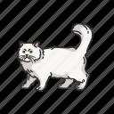 animal, cat, kitten, mammal, persian cat, pet, shirazi cat icon