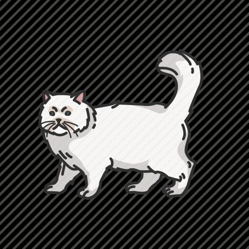Animal, cat, kitten, mammal, persian cat, pet, shirazi cat icon - Download on Iconfinder