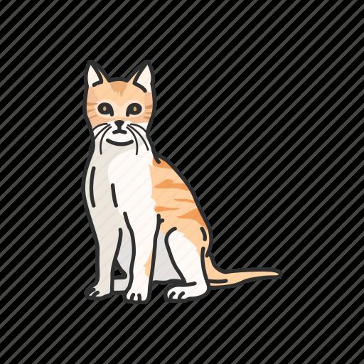 animals, cat, domestic cat, feline, kitten, mammal, pet icon