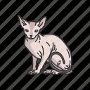 animals, cat, feline, kitten, mammal, pet, sphynx icon