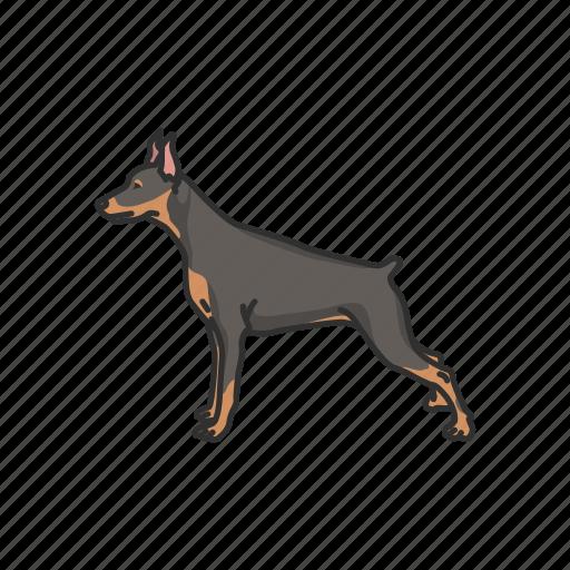 animals, badger dog, dachshund, dackel, dog, mammal, pet icon