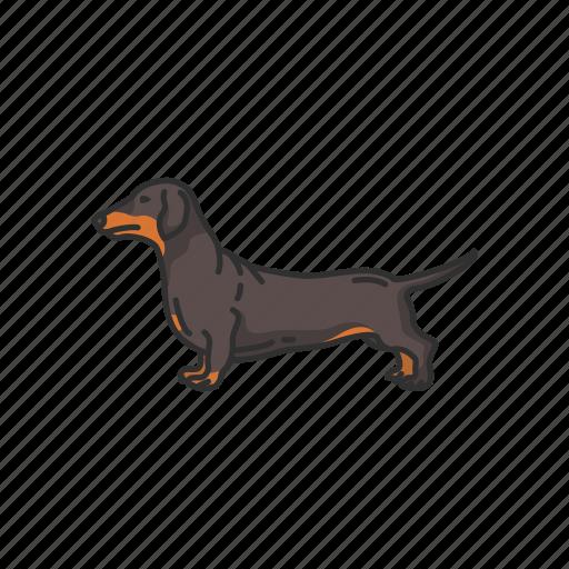 Animals, badger dog, dachshund, dog, mammal, pet icon - Download on Iconfinder