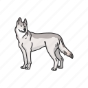 animals, canine, dog, gray wolf, mammal, timber wolf, wolf icon