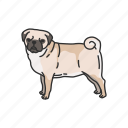 animals, canine, dog, mammal, pet, pug, puppy