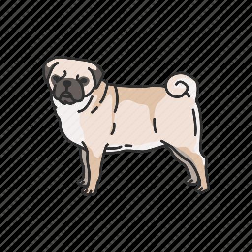 animals, canine, dog, mammal, pet, pug, puppy icon