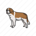 animals, dog, mammal, pet, puppy, st bernard, working dog