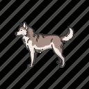 animal, canine, husky, mammal, siberian husky, sled dog, wolf icon
