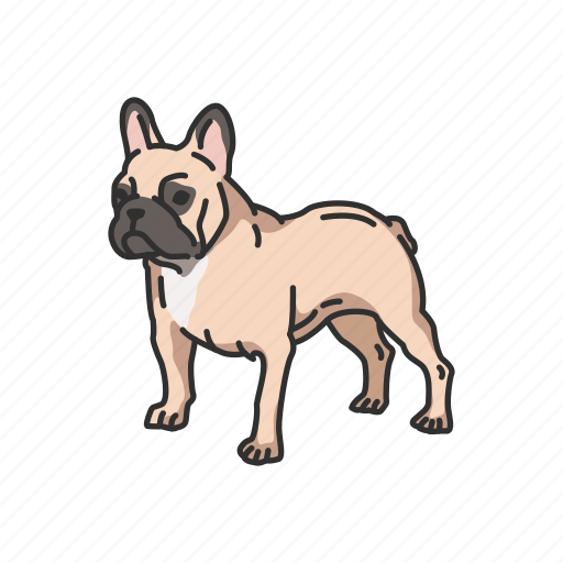 animals, boston terrier, bulldog, dog, mammals, pet icon
