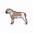 animal, bulldog, canine, dog, hefty dog, hound, mammals