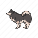 animals, dog, japanese spitz, mammal, pet, puppy, spitz icon