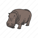 animals, hippo, hippopotami, hippopotamus, mammal, semiaquatic mammal