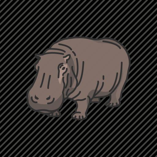 animals, hippo, hippopotami, hippopotamus, mammal, semiaquatic mammal icon